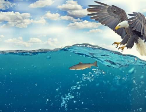 in LIGURIA il nido di Aquila reale a quota più bassa mai visto! 🦅