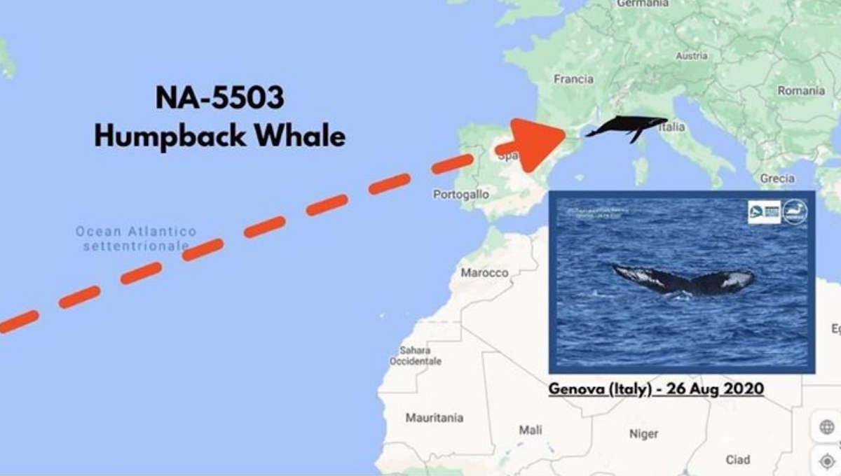 Avvistamento Megattera Genova Repubblica Dominicana