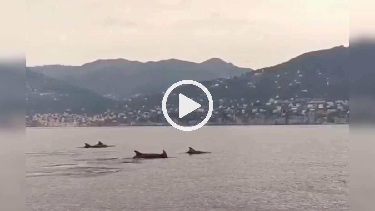 Delfini nel Golfo Paradiso
