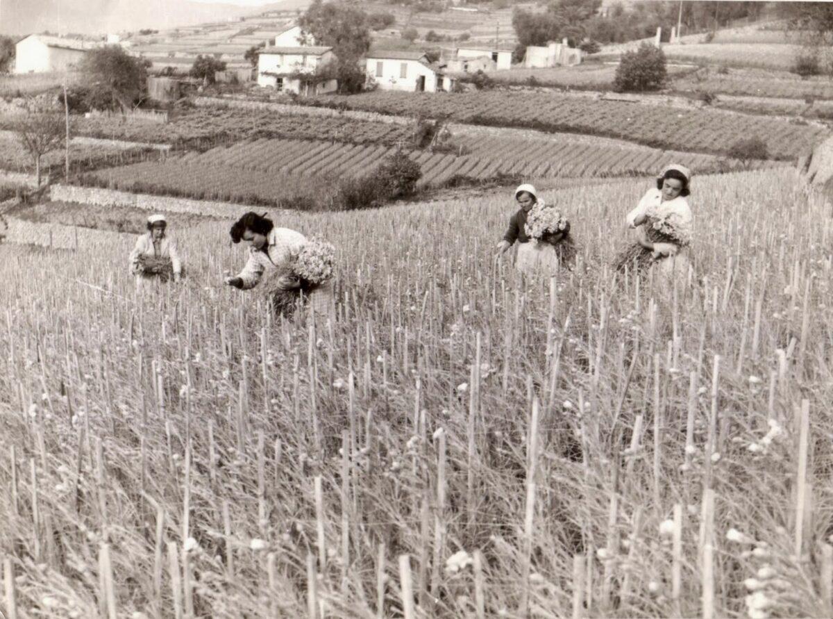 Foto archivio Istituto Sperimentale per la floricoltura di Sanremo