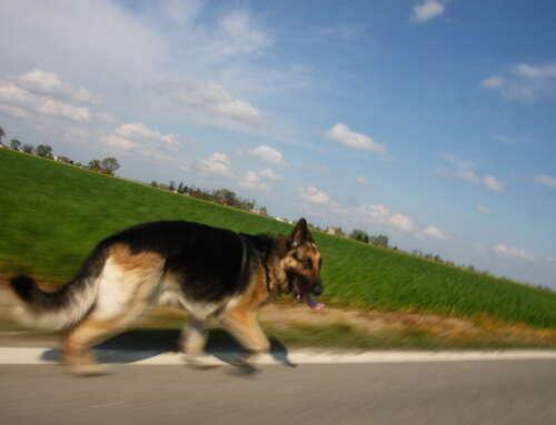 Autostrada dei Fiori: cane abbandonato ritorna a casa prima del padrone.